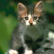 katty22