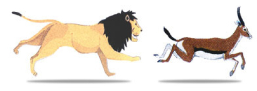 And these two situation often ends with lion eating the Gazelle like photo below (Reference)
