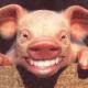 OGA's avatar