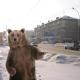 RussianStreetBear's avatar