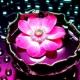 milanova0429's avatar