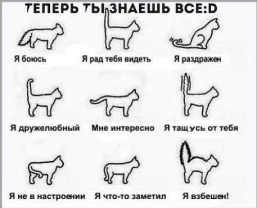 грузов что значит выражение у кошки 9 жизней юбилею всегда отношение