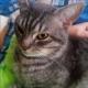 Openair's avatar