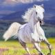 white_cloud's avatar