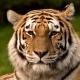 stripedcat07's avatar
