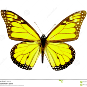 Бабочки!!!